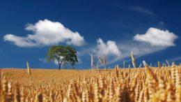 Agroturystyka i dywersyfikacja działalności agroturystycznej