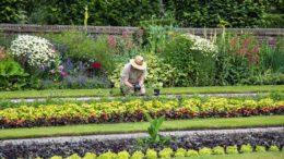 Terapia ogrodnicza horiterapia