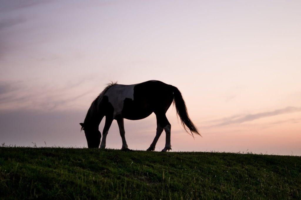 na obozach konie mogą odpoczywać na ogromnych wybiegach