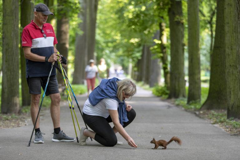 seniorka wiewiórka
